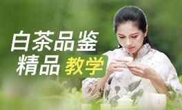 玩转中国茶『白茶系统课』
