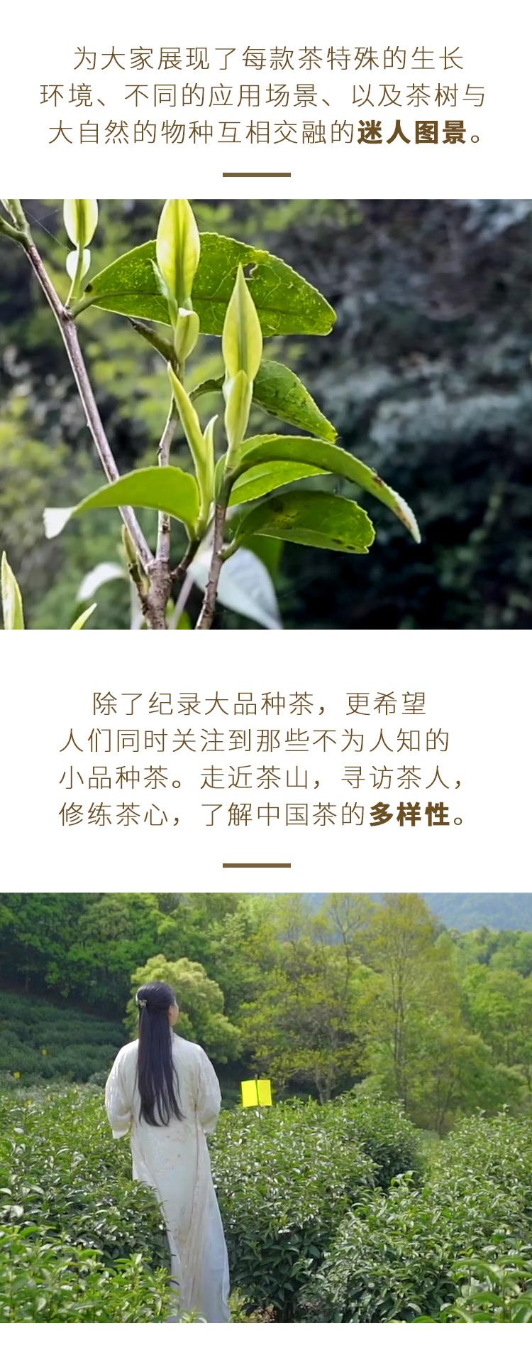 茶仙子_09