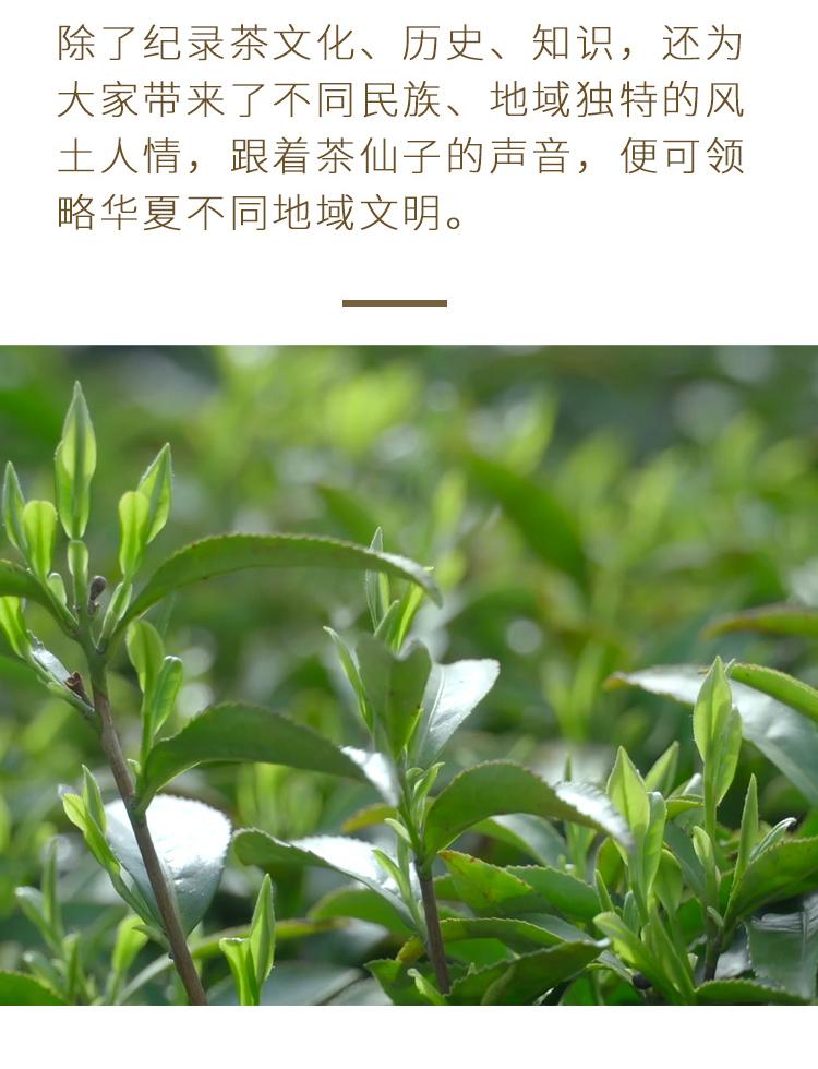 茶仙子音频_11